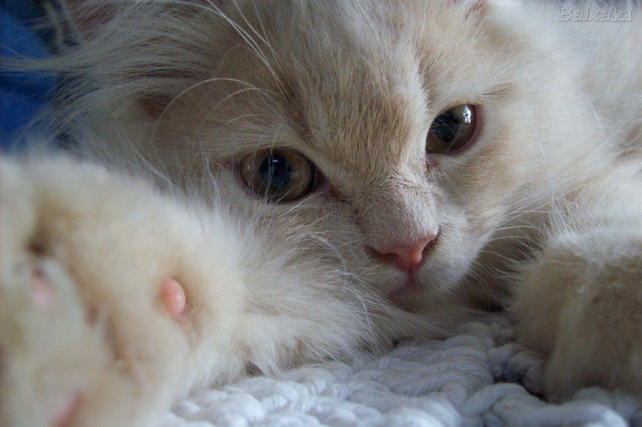 Sagrados e malditos: gatos