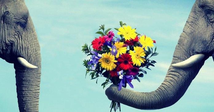 elefante rudes recebendo flores